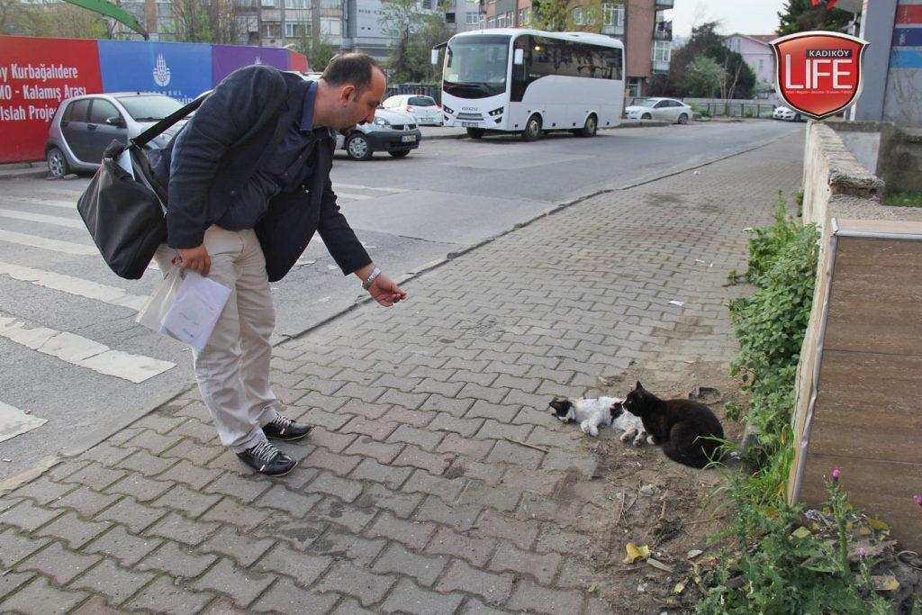 Kadıköy kedileri