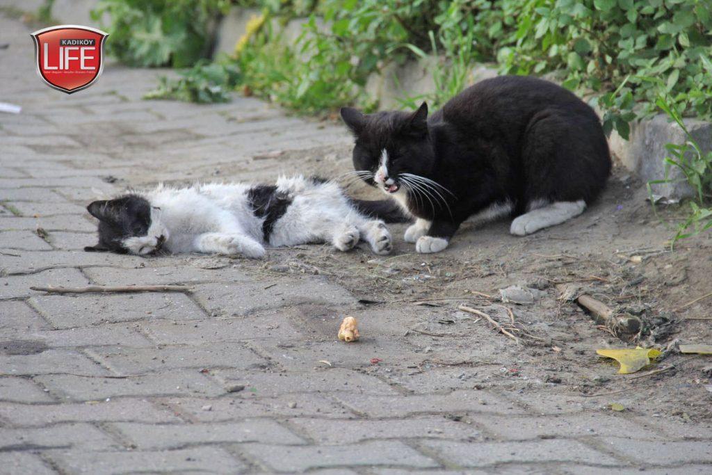 kadikoy-kedileri-acisiyla-tatlisiyla-kadikoy-life-dergisi (15)