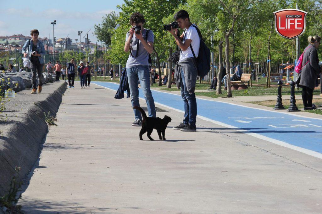 kadikoy-kedileri-acisiyla-tatlisiyla-kadikoy-life-dergisi (2)
