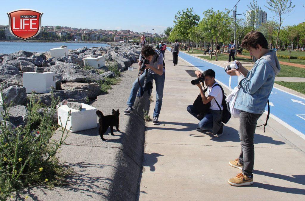 kadikoy-kedileri-acisiyla-tatlisiyla-kadikoy-life-dergisi (3)