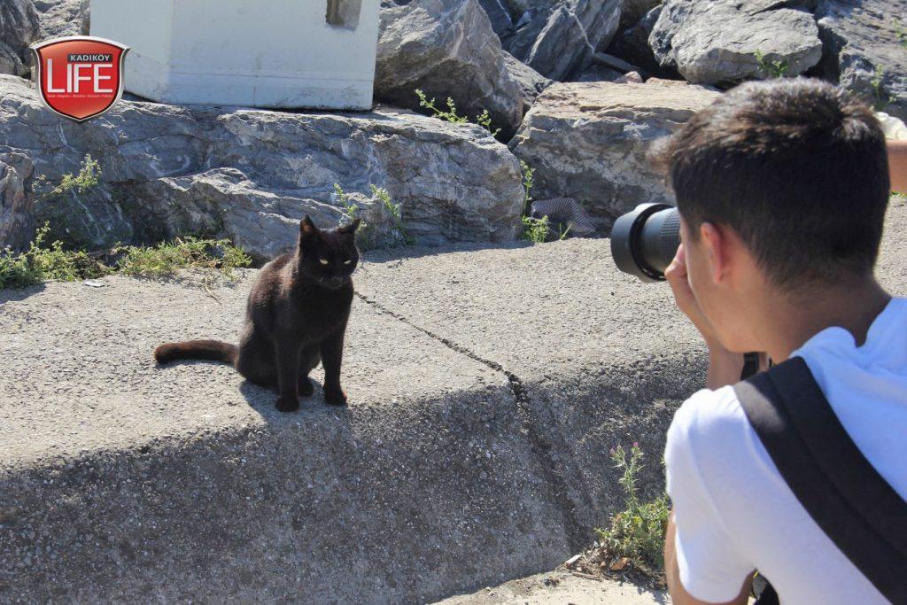 kadikoy-kedileri-acisiyla-tatlisiyla-kadikoy-life-dergisi (4)