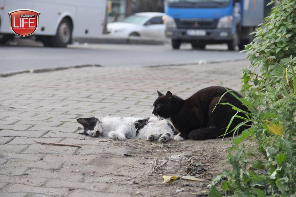 kadikoy-kedileri-acisiyla-tatlisiyla-kadikoy-life-dergisi (6)