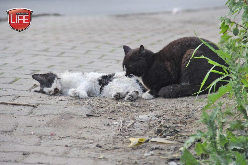 kadikoy-kedileri-acisiyla-tatlisiyla-kadikoy-life-dergisi (8)