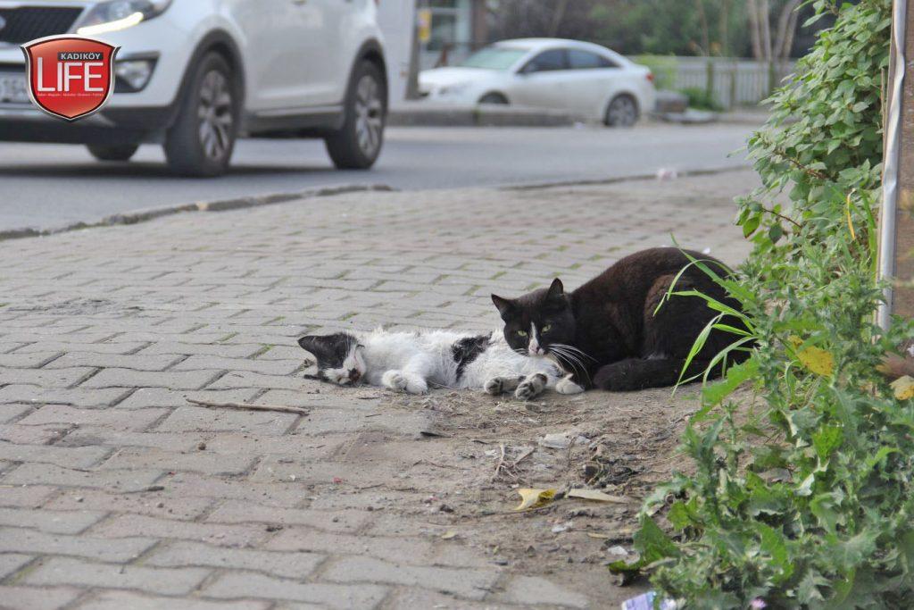 kadikoy-kedileri-acisiyla-tatlisiyla-kadikoy-life-dergisi (9)