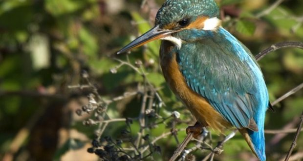 Karaman'ın Kuşları