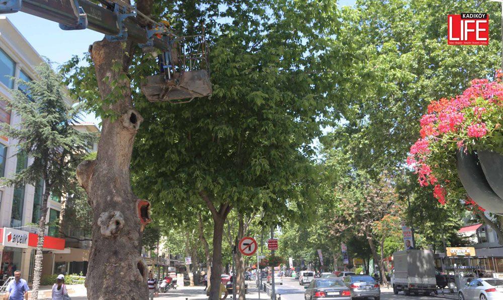 bagdat-caddesinin-asirlik-agaclarina-bakim (3)