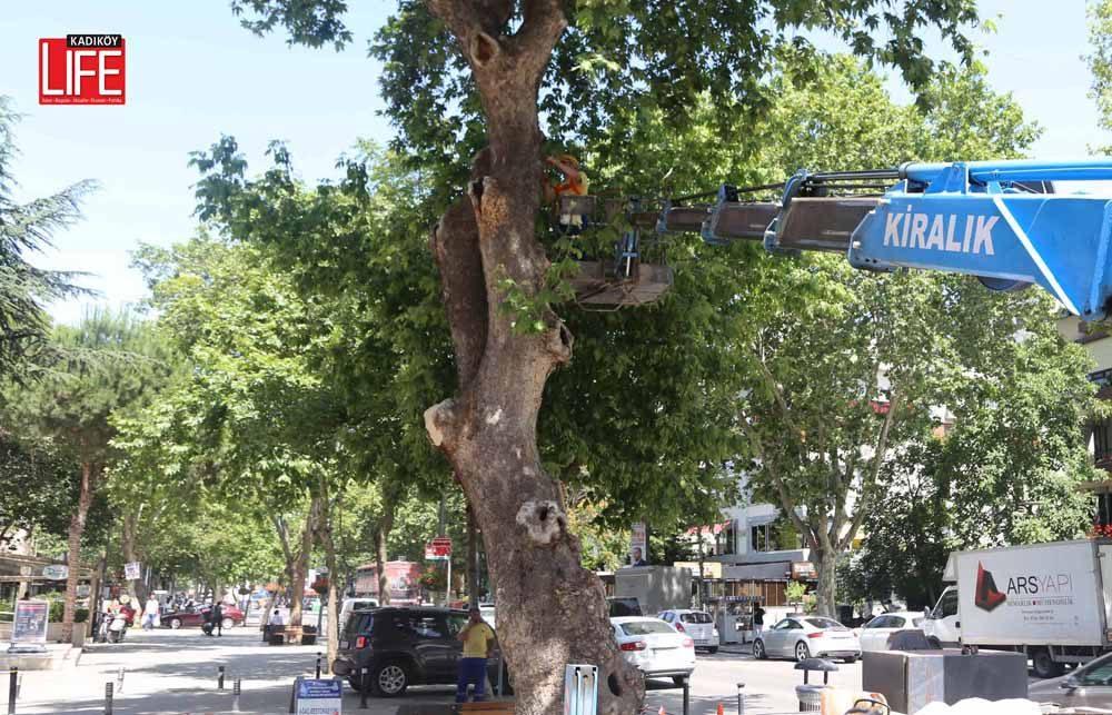 bagdat-caddesinin-asirlik-agaclarina-bakim (4)