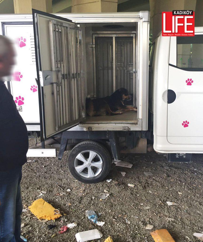 Sokak hayvanları da, emniyet güçlerince korumaya alındı, veteriner ekiplere teslim edildi. Kadıköy Belediyesi ekipleri, çalışmaya bu yönde destek sağladı.