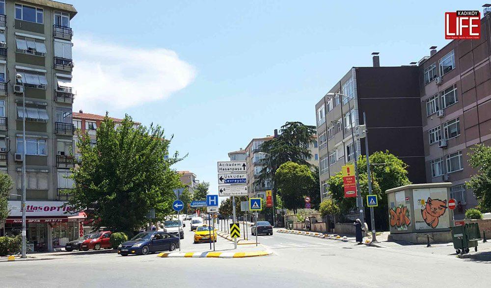 sarayardi-caddesine-manolya-agaclari (1)