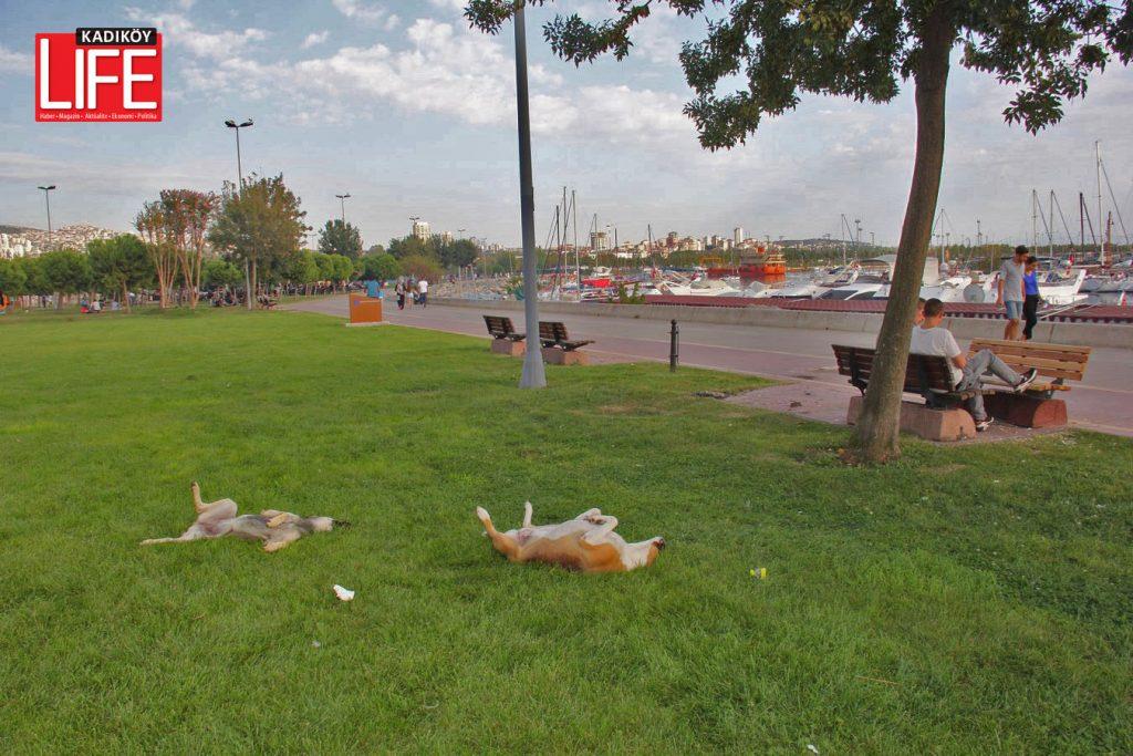 istanbul-guzel-yasamasini-bilene-sokak-kopekleri-can-dostlar-sahil-anadolu-yakasi-kadikoy-life-dergisi-6