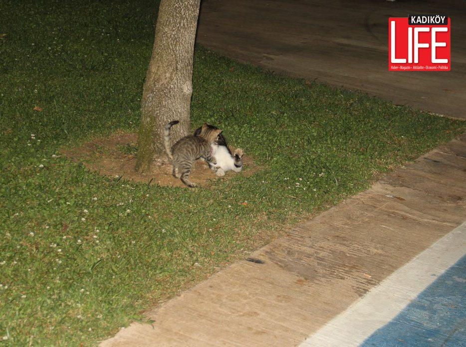 kadikoy-kalamis-kedileri-kis-oncesi-son-oyunlar-4