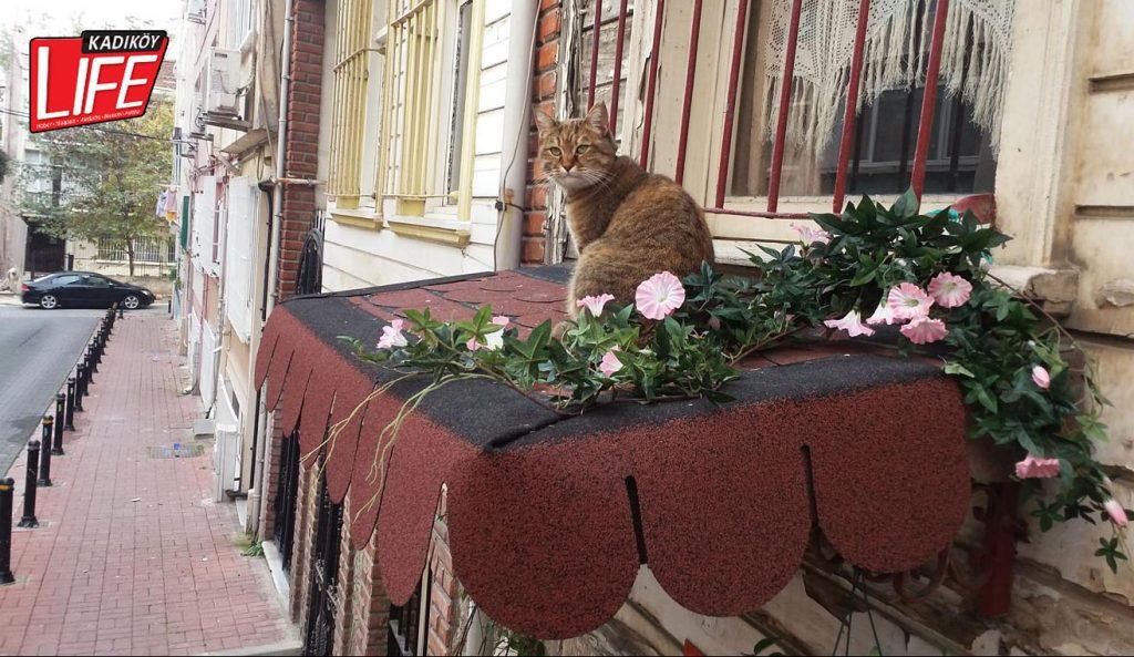 """""""Burası benim balkonum, çiçeksiz oturmam..."""""""