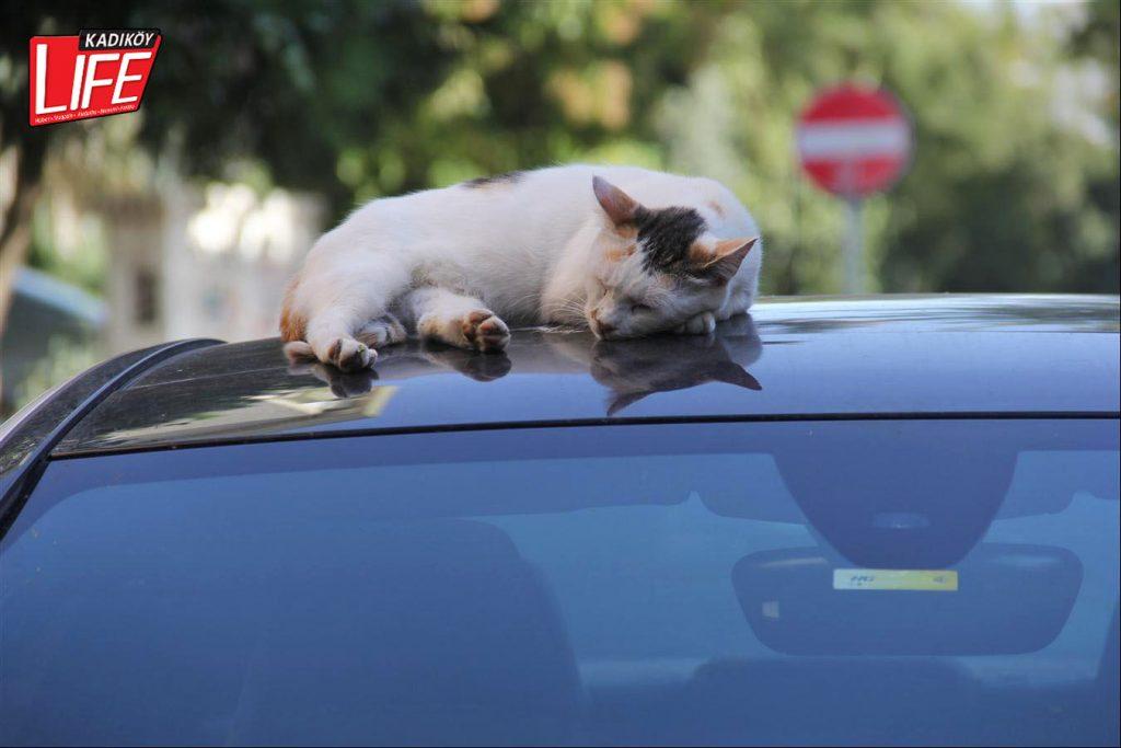 Moda'da arabanın üzerinde uyuyan güzel...