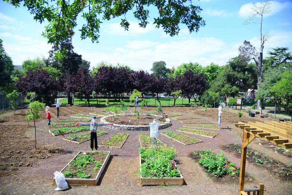 fenerbahce-parkinde-permakultur-bahcesi (1)