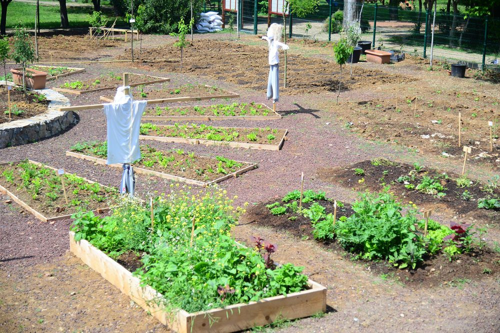 fenerbahce-parkinde-permakultur-bahcesi (5)