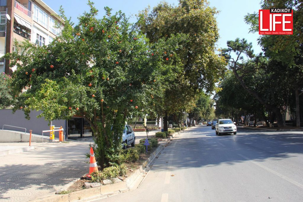 nar ağacı
